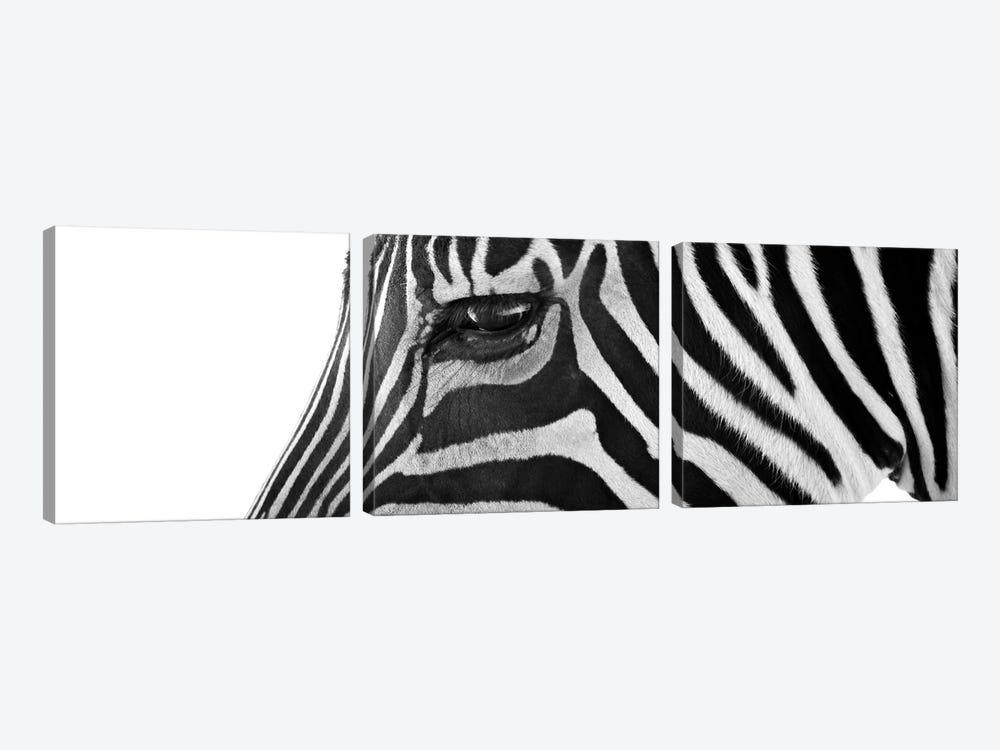 Ignoring Zebra by Bob Larson 3-piece Canvas Print