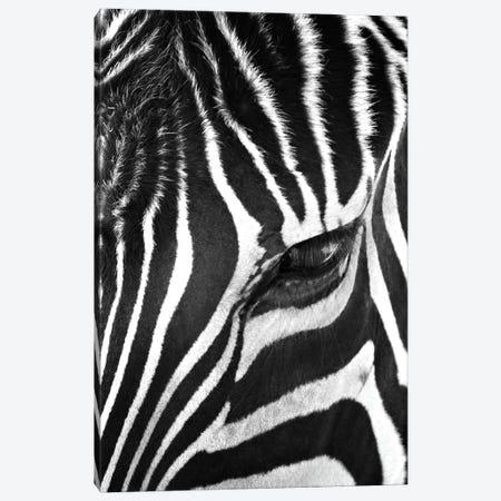 Zebra Stare Canvas Print #7049} by Bob Larson Canvas Artwork