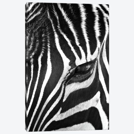 Zebra Stare Canvas Print #7049} by Bob Larson Canvas Artwork