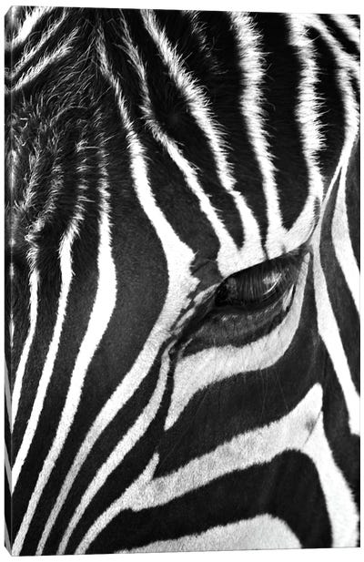 Zebra Stare Canvas Art Print
