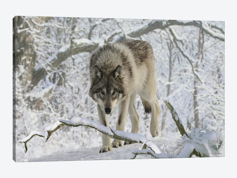 Zoo Wolf 03 by Gordon Semmens 1-piece Canvas Wall Art