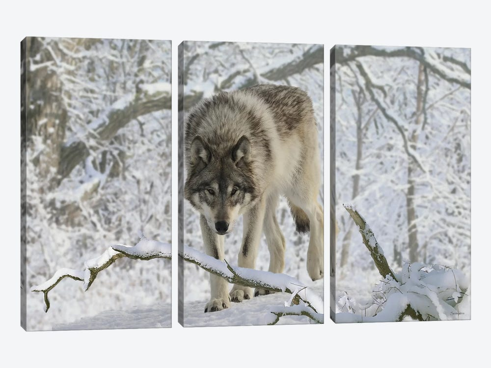 Zoo Wolf 03 by Gordon Semmens 3-piece Canvas Wall Art