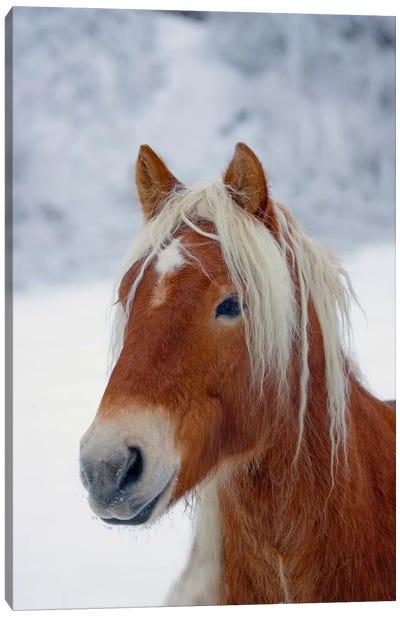 Brown Pony Canvas Art Print
