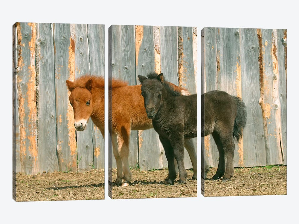 Brown & Black Pony by Carl Rosen 3-piece Canvas Art Print