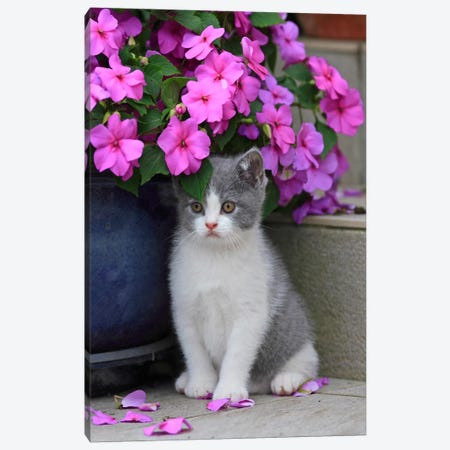 Kitten & Flowers Canvas Print #7086} by Carl Rosen Canvas Print