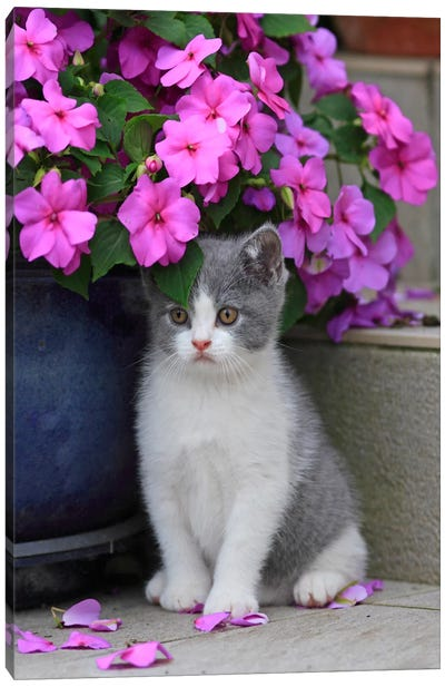 Kitten & Flowers Canvas Art Print