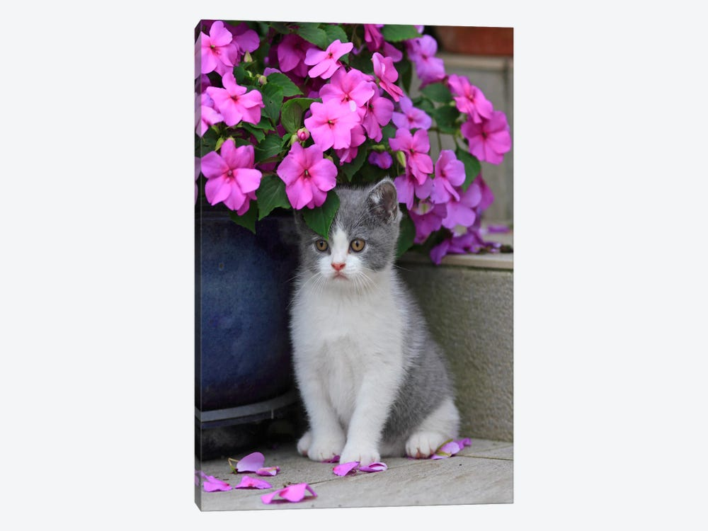 Kitten & Flowers by Carl Rosen 1-piece Canvas Art
