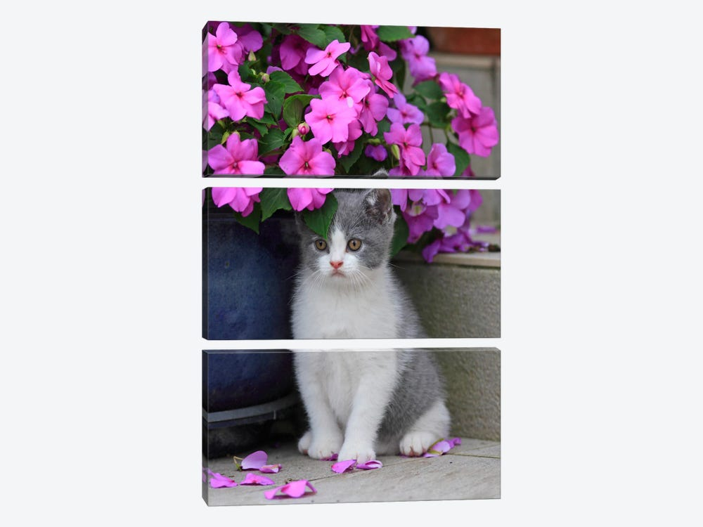Kitten & Flowers by Carl Rosen 3-piece Canvas Art