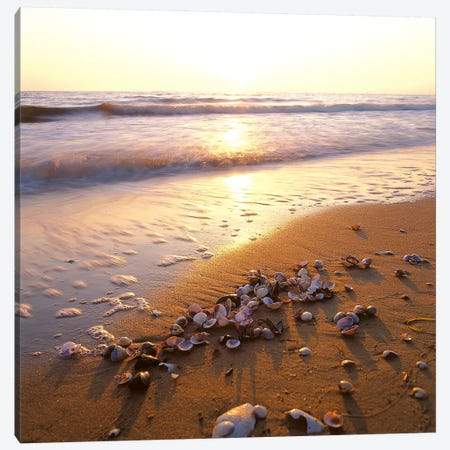 Sunrise at the Ocean Canvas Print #7089} by Carl Rosen Canvas Wall Art