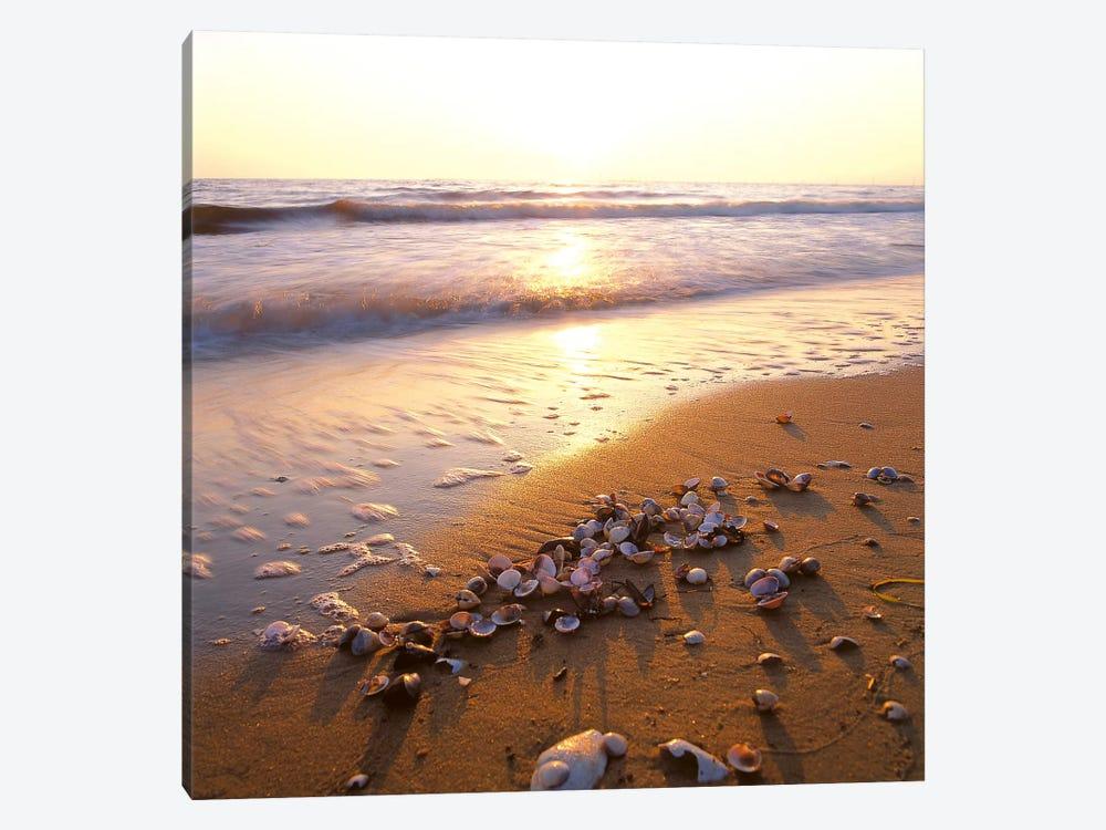 Sunrise at the Ocean by Carl Rosen 1-piece Art Print