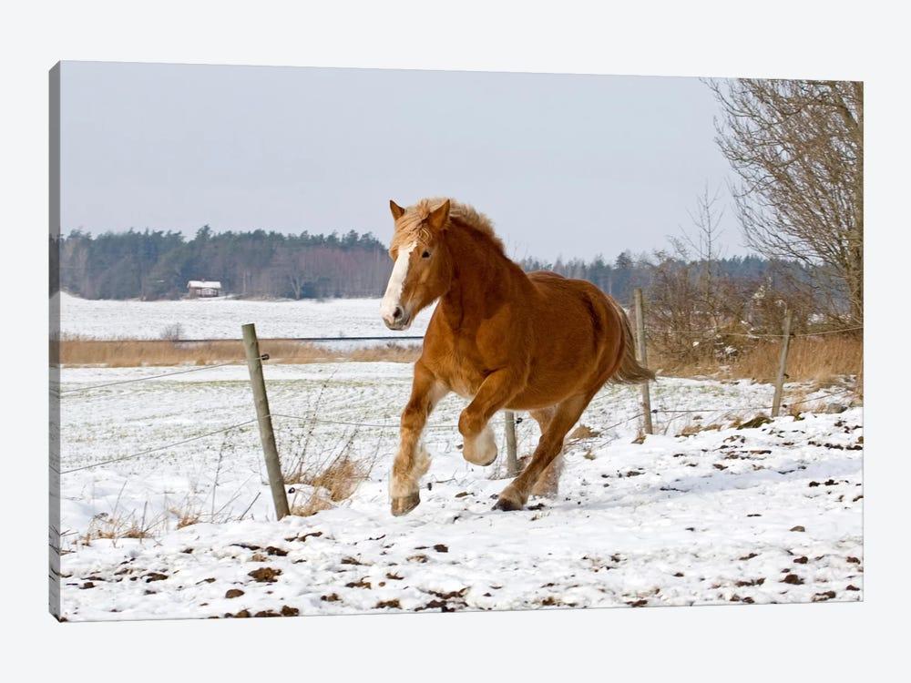 Brown Pony III by Carl Rosen 1-piece Art Print