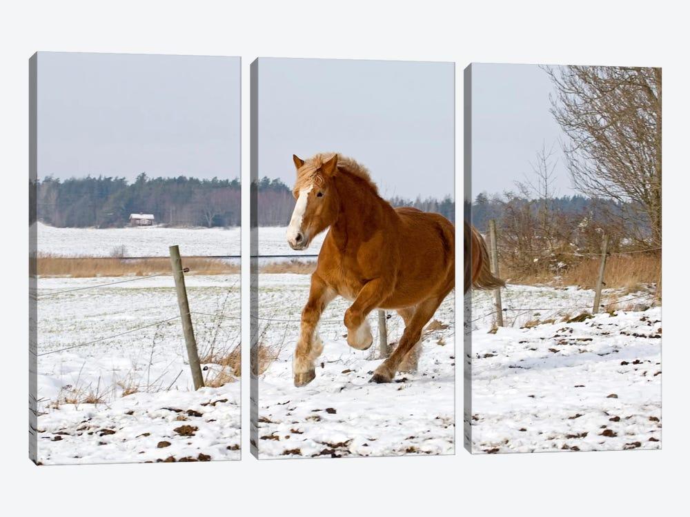 Brown Pony III by Carl Rosen 3-piece Art Print