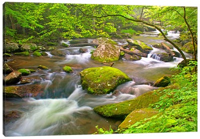 Little River Rapids Canvas Art Print