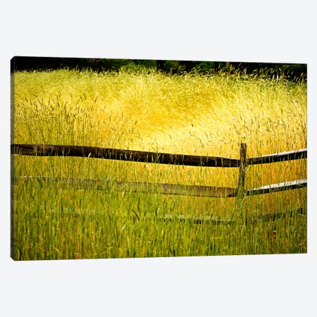 Sea of Grass Canvas Print #7095} by Bob Rouse Canvas Wall Art