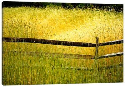 Sea of Grass Canvas Print #7095