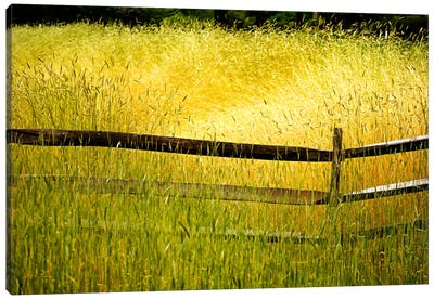Sea of Grass Canvas Art Print