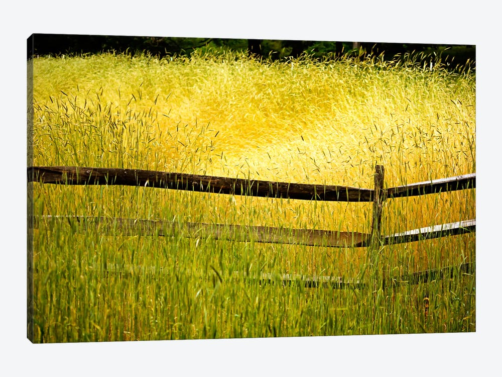 Sea of Grass by Bob Rouse 1-piece Canvas Art
