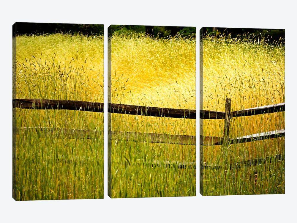 Sea of Grass by Bob Rouse 3-piece Canvas Wall Art