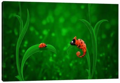 Ladybug & Chameleon Canvas Art Print