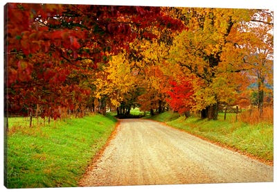 Sparks Lane, TN Canvas Art Print