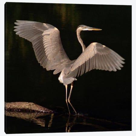 Big Bird Canvas Print #7128} by J.D. McFarlan Canvas Print