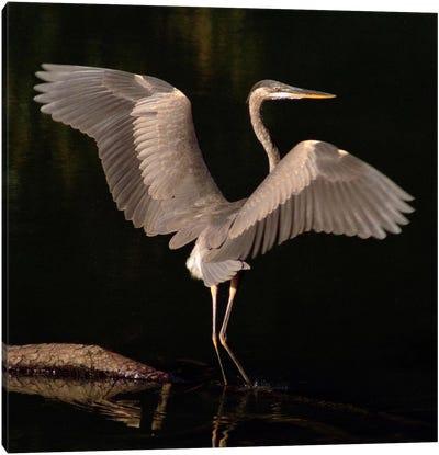 Big Bird Canvas Art Print