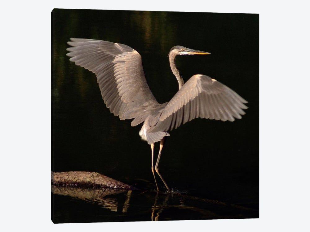 Big Bird by J.D. McFarlan 1-piece Canvas Print