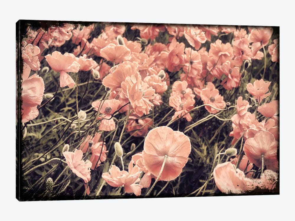 Ginger Poppies by Mindy Sommers 1-piece Canvas Art Print