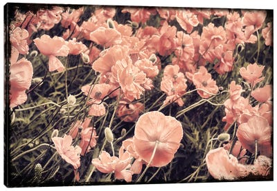 Ginger Poppies Canvas Art Print