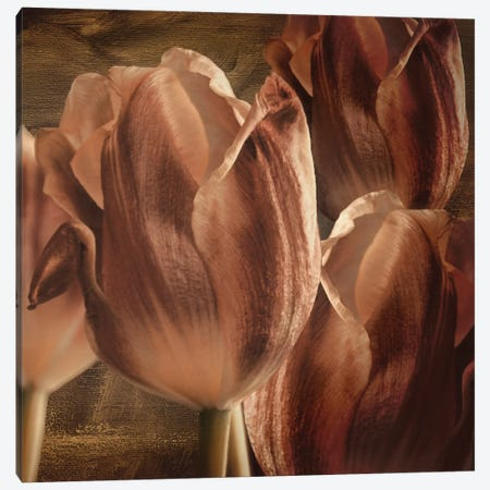 Copper Tulips Canvas Print #7132} by Mindy Sommers Canvas Wall Art
