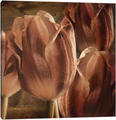 Copper Tulips Canvas Art Print