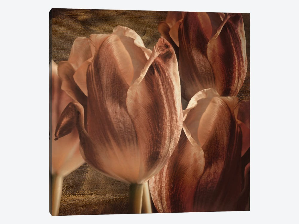 Copper Tulips by Mindy Sommers 1-piece Canvas Wall Art