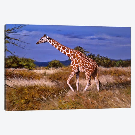 Reticulated Giraffe Canvas Print #7138} by Pip McGarry Canvas Artwork