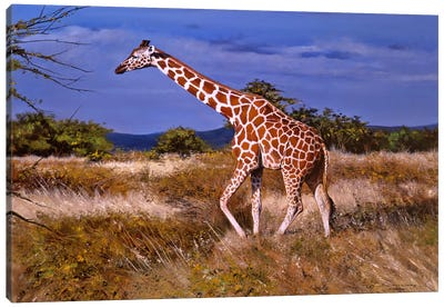 Reticulated Giraffe Canvas Art Print
