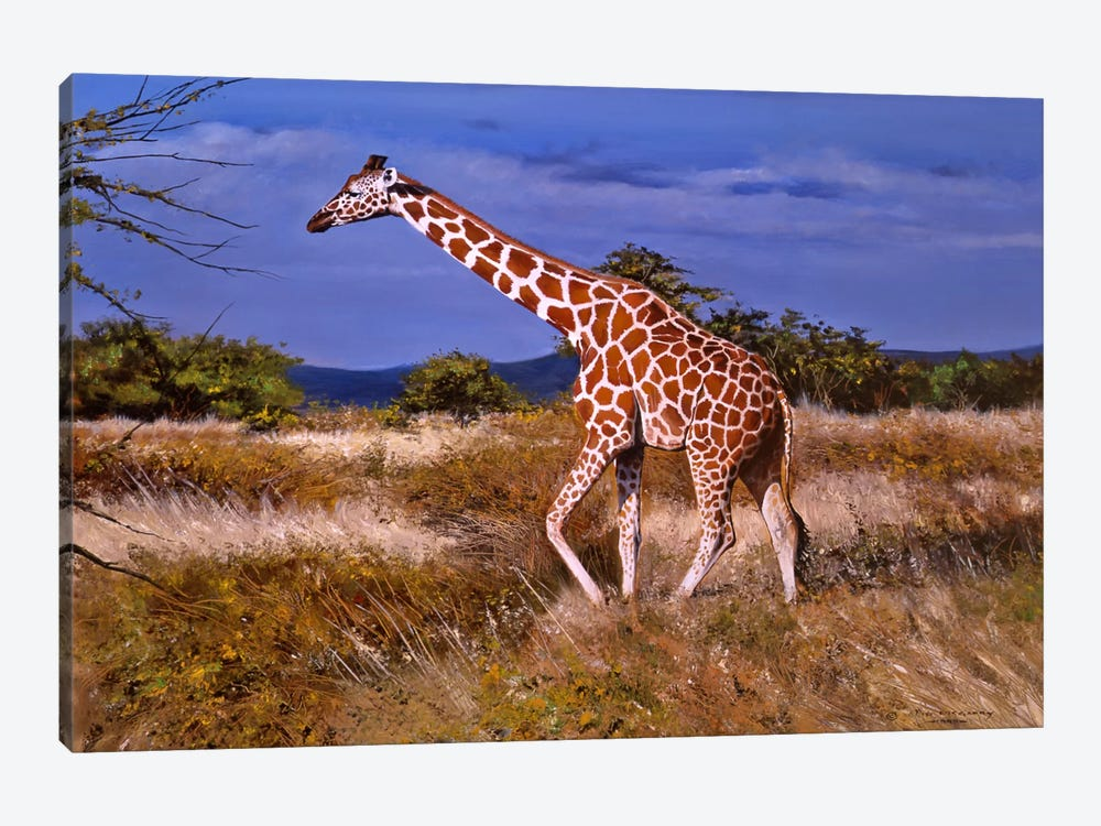 Reticulated Giraffe by Pip McGarry 1-piece Canvas Artwork