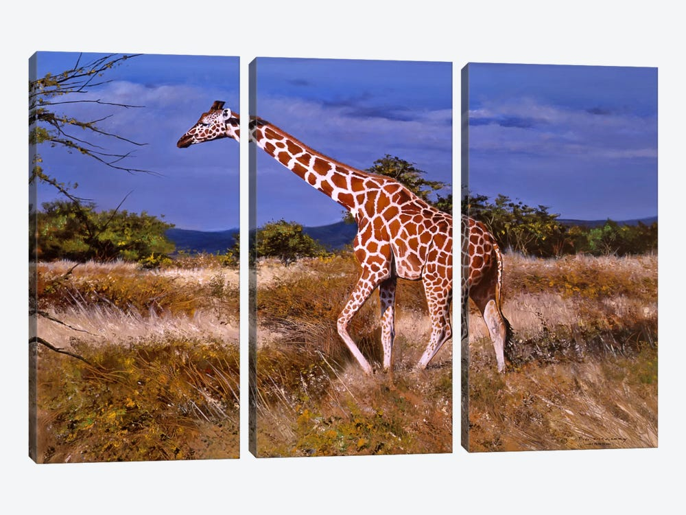 Reticulated Giraffe by Pip McGarry 3-piece Canvas Artwork
