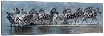 Flight of The Zebras Canvas Art Print