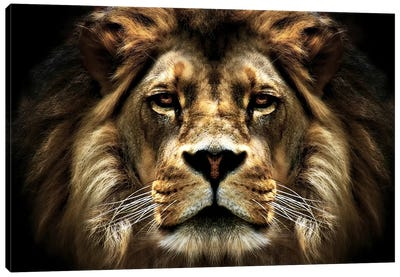 The Lion Canvas Art Print