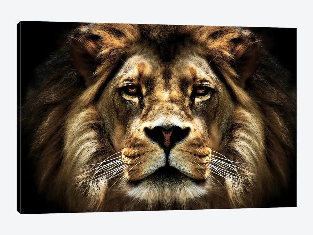 The Lion by SD Smart 1-piece Canvas Art Print
