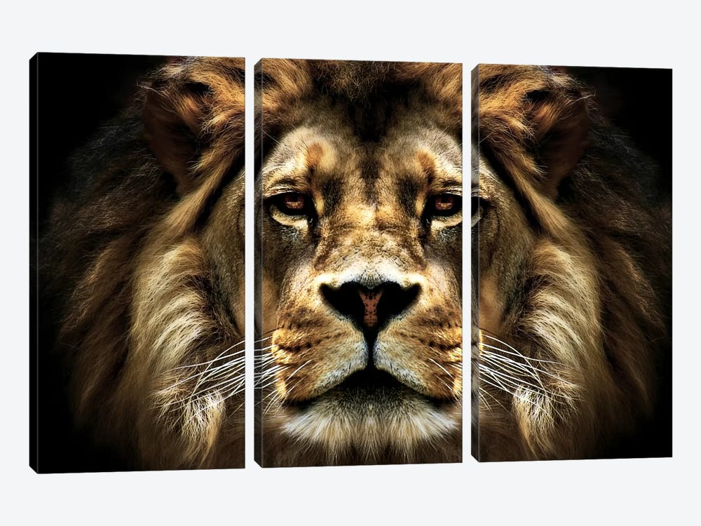 The Lion by SD Smart 3-piece Canvas Print