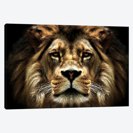 The Lion Canvas Print #7142} by SD Smart Canvas Art Print