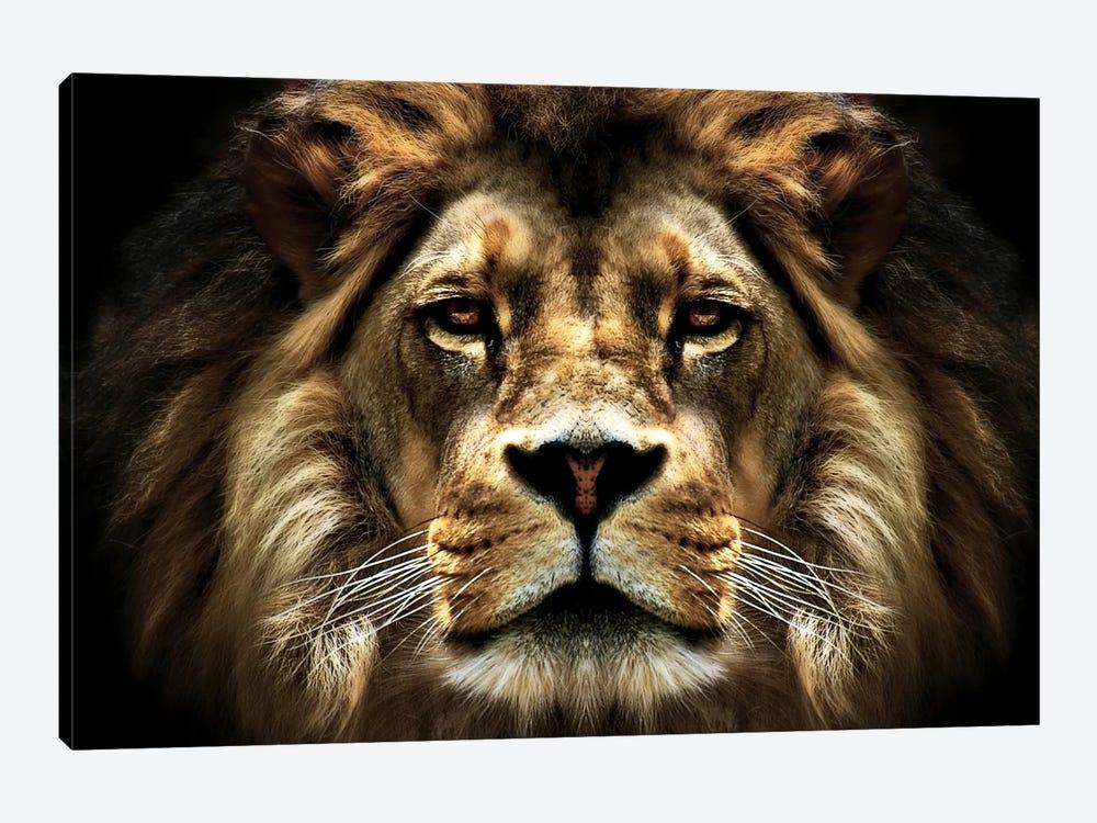 The Lion by SD Smart 1-piece Canvas Art Print