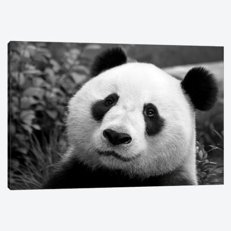 Giant Panda Canvas Print #7146} by SD Smart Canvas Wall Art