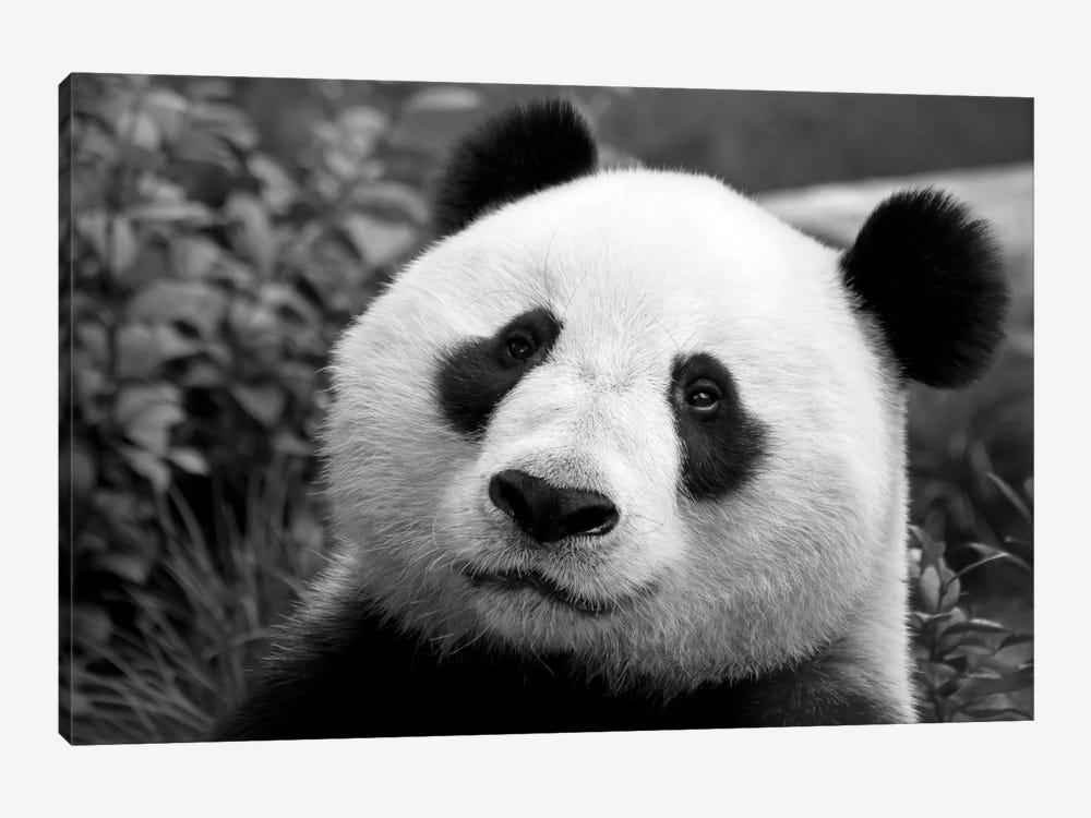 Giant Panda by SD Smart 1-piece Art Print