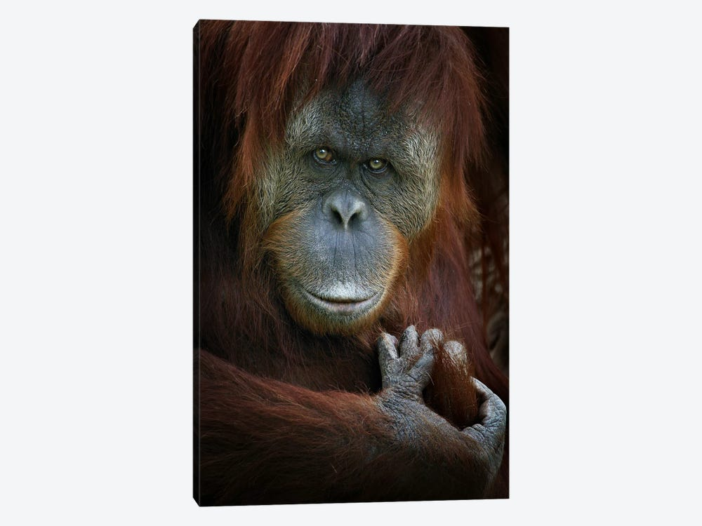 Emotion by SD Smart 1-piece Canvas Art