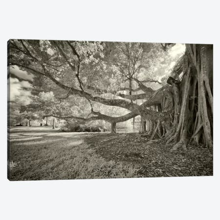 Terraphilia Canvas Print #7150} by Geoffrey Ansel Agrons Canvas Artwork