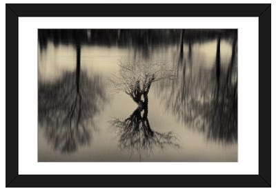 Rhizomes Framed Art Print