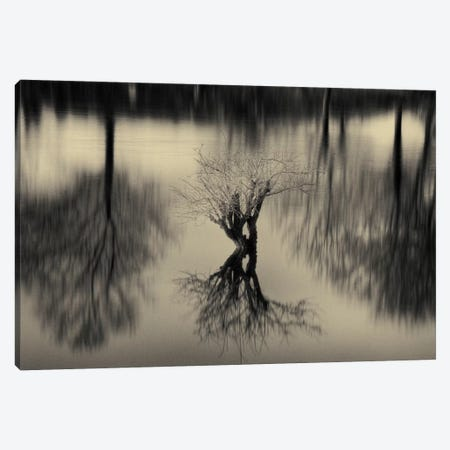 Rhizomes Canvas Print #7151} by Geoffrey Ansel Agrons Canvas Wall Art