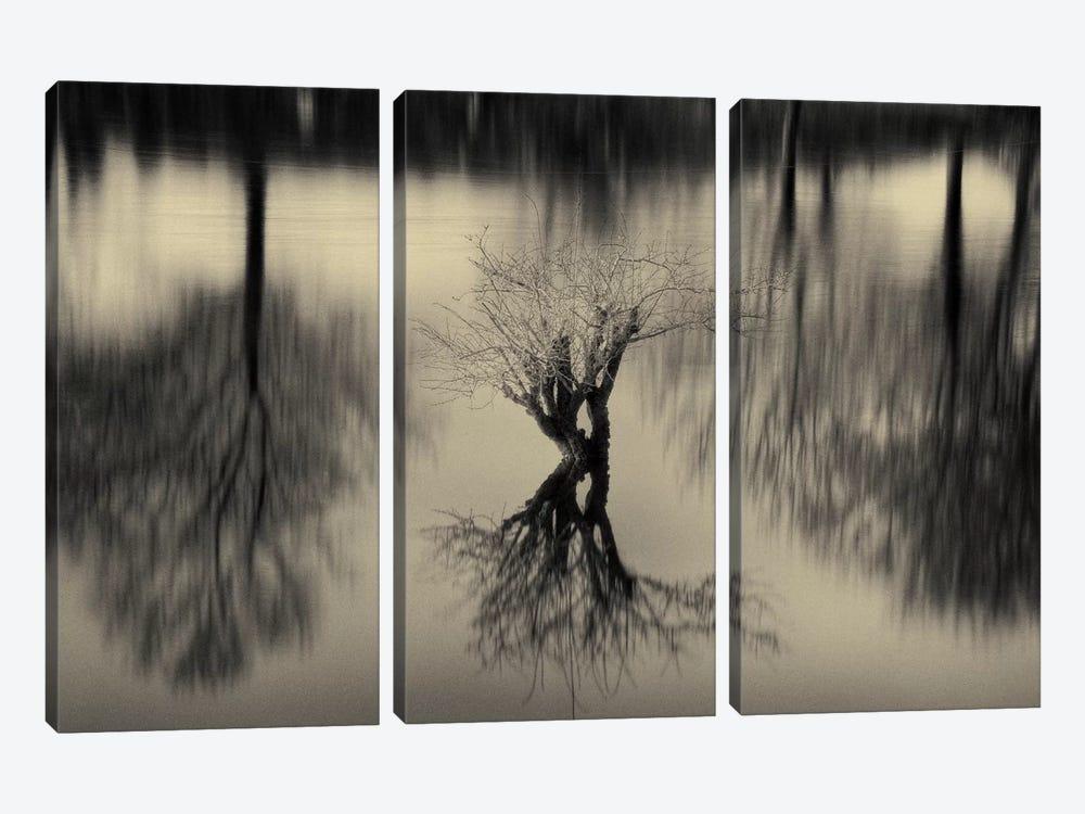 Rhizomes by Geoffrey Ansel Agrons 3-piece Canvas Art Print