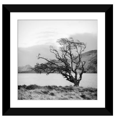 Connemara Tree I Framed Art Print